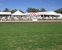 sunshine turf club image